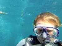 水底自拍算什么 我还要和鲨鱼同框