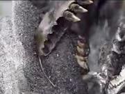 新西兰海滩发现巨型不明物体 疑为史前生物