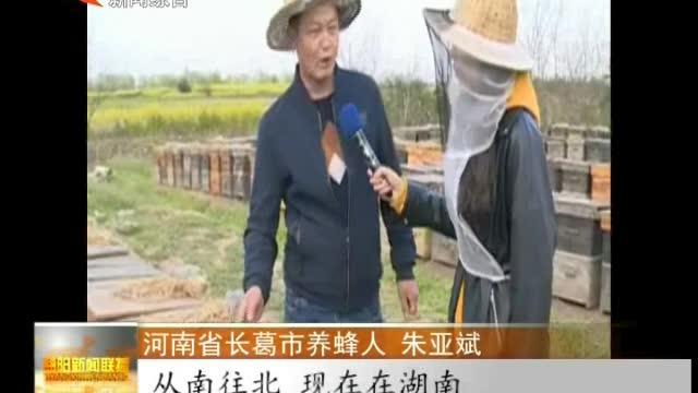 """南县:56万亩油菜花开正当季 养蜂人汇聚""""花海""""放蜂采蜜"""