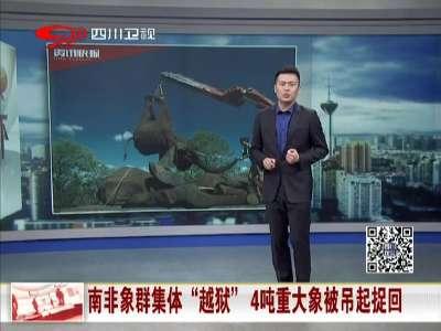"""[视频]南非象群集体""""越狱"""" 4吨重大象被吊起捉回"""
