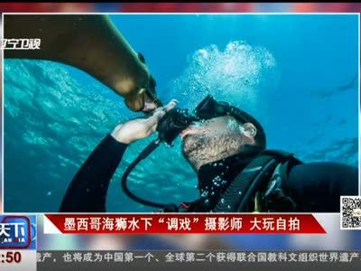 """[视频]墨西哥海狮水下""""调戏""""摄影师 大玩自拍"""