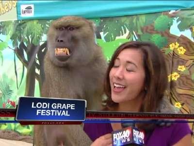 美女记者遭猩猩袭胸 在线观看