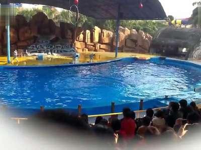 南宁动物园 海豚表演