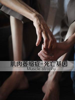 肌肉萎缩症-死亡基因