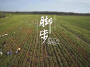 《舌尖上的中国2》20140418:脚步