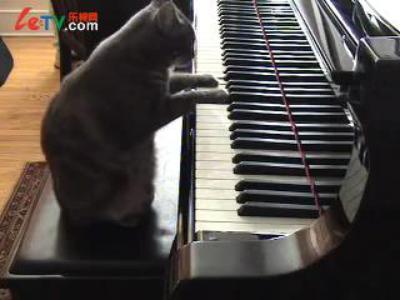 可爱猫咪弹钢琴pk朗朗
