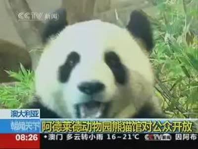 阿德莱德动物园熊猫馆对公众开放