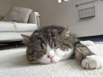 超萌动物睡觉 简笔画