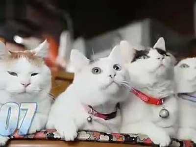 4个可爱猫咪一起卖萌