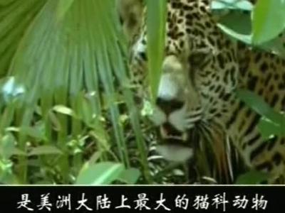 神奇的动物世界38_百度影视