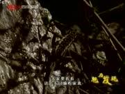 《魅力发现》20110908:云豹