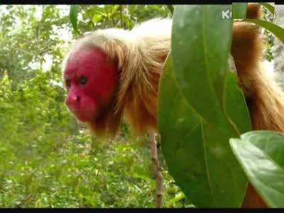 世界上100种最稀奇古怪的动物合集