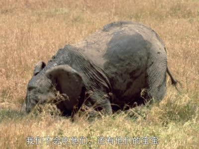 我的动物朋友 大象