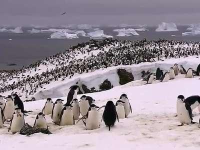 南极洲 2- 在线观看