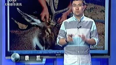 梅花鹿被割鹿角 动物园称防打架