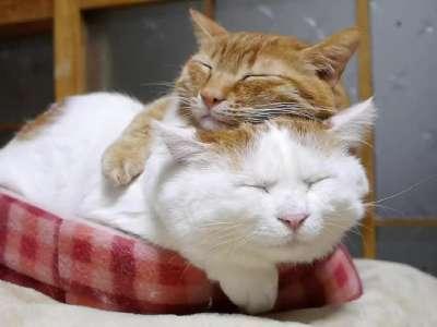 猫叔与小伙伴叠罗汉睡懒觉