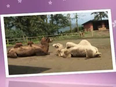 雅安野生动物园- 在线观看